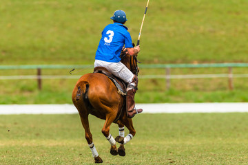 Polo Players Ponies equestrian game action