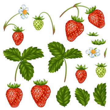 Set of red strawberries, flowers and leaves