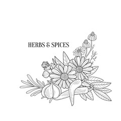 Herbs And Spices Bouquet Hand Drawn Realistic Sketch