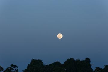 Pleine lune sur la végétation de la commune de Mana dans l'ouest de la Guyane française,