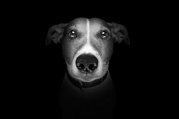 dog isolated on black Wall mural