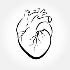 Human heart anatomy vector. Simple design stylized drawings.