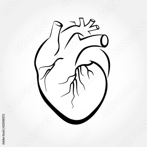 simple human heart drawing