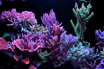 Aluminium Prints Under water Dream coral reef aquarium tank