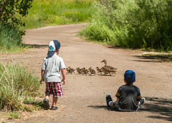 Two boys watch as a family of ducks cross the road in front of them