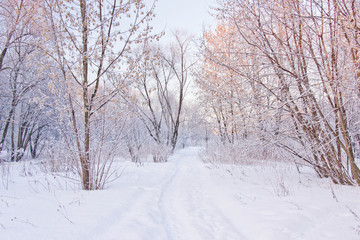 snowy path through the trees in park