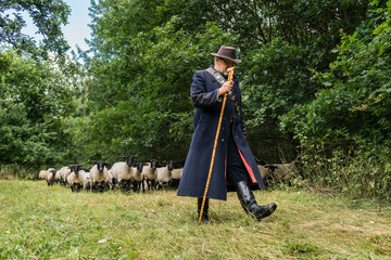 Shepherd leading his flock of sheep to another meadow