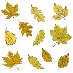 Vector set of autumn yellow leaves