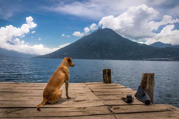 Dog looking to horizon at Atitlan Lake with San Pedro volcano on