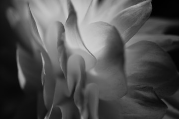 Soft focus black and white flower texture