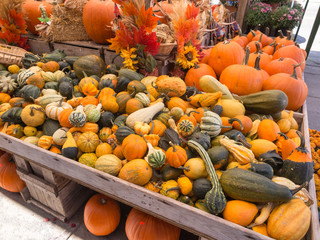Pumpkins and Squash at Fall Market