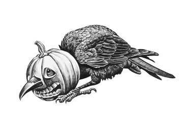 Raven head stuck in a pumpkin.