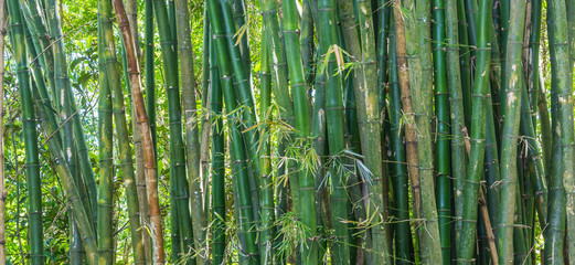 Fundo com bambus.