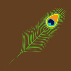 Peacock feather. Exotic tropical bird colorful tail. Isolated. Brown background. Flat design.