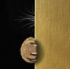A cat's paw with long and sharp claws and whiskers on a book cover.