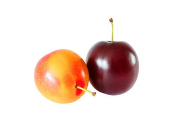 whole yellow and purple plum isolated on white background with clipping path