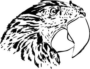 parrot's face