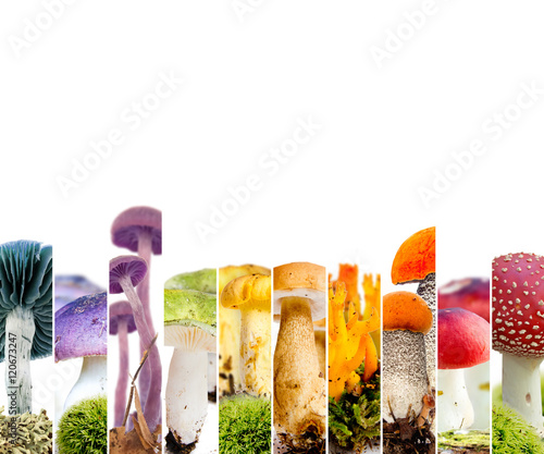 Various - Mushroom 01