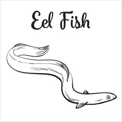 Live eel fish, sketch style vector illustration isolated on white background. Drawing of eel fish as luxury seafood delicacy. Edible underwater creature, healthy organic seafood or shellfish food