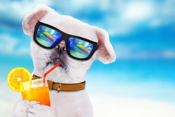 Dog wearing sunglasses relaxing in the sea background.