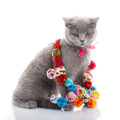 Scottish Fold cat with colorful decorations sitting on white