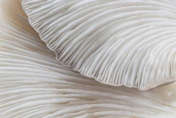 Photo sur Toile Les Textures abstract background macro image of mushroom, Sajor-caju Mushroom