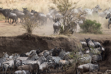 Africa Great Migration