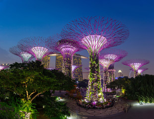 SINGAPORE - August 28, 2016: Supertrees at Gardens by the Bay.