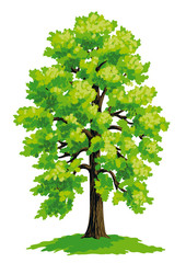 Linden tree - vector drawing