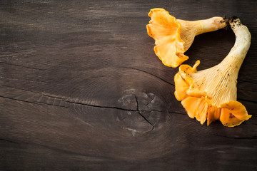 Fresh chanterelle mushrooms on rustic wooden background
