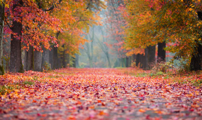 Autumn Park path covered in fallen coloured leaves