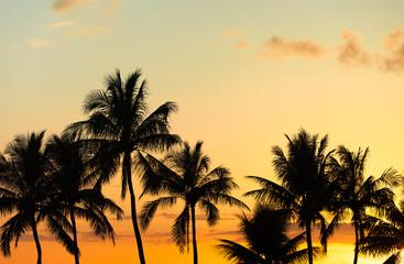 Beautiful tropical sunset.