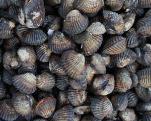 Background and texture of fresh cockle shell, Shell with black and white color ready for food