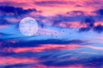 Moon Clouds Birds