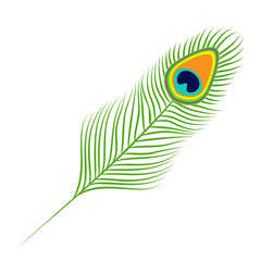 Peacock feather. Exotic tropical bird colorful tail. Isolated. White background. Flat design.