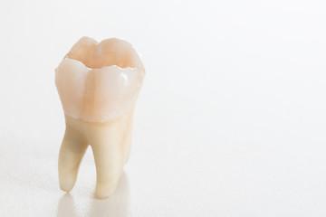 Real molar teeth