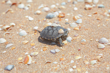 turtle on the beach with shells