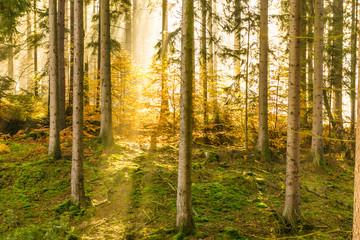 Herbst Wald mit Sonnenstrahl und Nebel