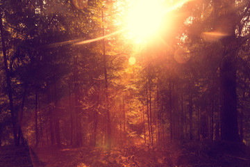 Bright artistic sunlight in forest. Beautiful golden red sunny forest landscape.