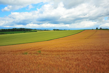 Fotobehang Weide, Moeras Cultivated Lands at Countryside of Hokkaido, Japan