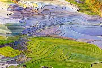 Beautiful terraced rice fields in Vietnam