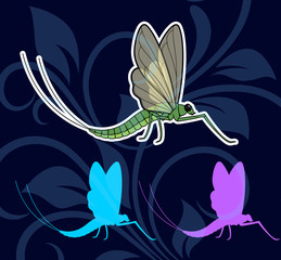 Mayfly Insects
