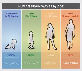 Ondes Cérébrales Humaines - Diagramme en Fonction de l'Age / Infographie Multicolore en Anglais
