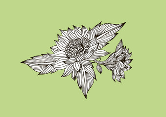 feather and flowers vector