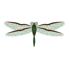 Dragonfly on white background