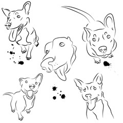 vector set of smiling dogs