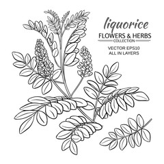 illustration with liquorise plant