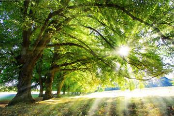 Zielone drzewa w promieniach słońca