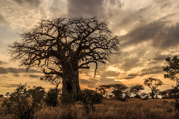 Baobab Tree at Sunset, Tanzania