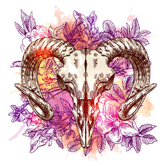 illustration  animal skull